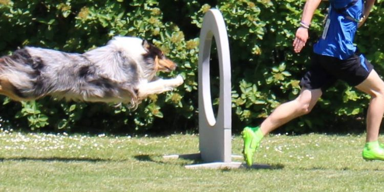 Wiederaufnahme des Hundesportbetriebs